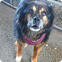 Adopt A Pet :: Bear - Paso Robles, CA
