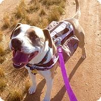 Adopt A Pet :: Bongo (ARSG) - Santa Ana, CA