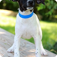 Adopt A Pet :: Mougli - Waldorf, MD