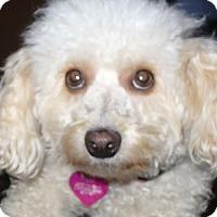 Adopt A Pet :: Emmie - La Costa, CA