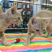 Adopt A Pet :: Chandler & Cooper - Gilbert, AZ