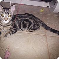 Adopt A Pet :: Frankie - Riverside, CA