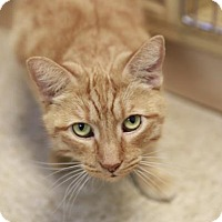 Adopt A Pet :: Teddy - Kettering, OH