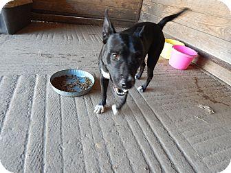Labrador Retriever/Retriever (Unknown Type) Mix Dog for adoption in Cuero, Texas - Sneaky