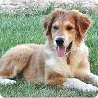 Adopt A Pet :: Chuck - Mooy, AL