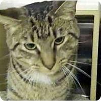 Adopt A Pet :: Motormouth - Colmar, PA