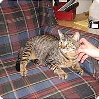 Adopt A Pet :: Luna(Declawed) - Clay, NY