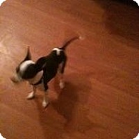 Adopt A Pet :: Sonny - Justin, TX