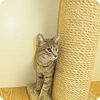 Adopt A Pet :: Jacob - Milwaukee, WI