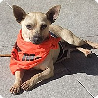 Adopt A Pet :: Mr. Peabody - Acton, CA