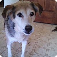 Adopt A Pet :: Millie - Warrenton, NC