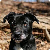 Adopt A Pet :: Cooper - Baden, PA