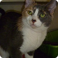 Adopt A Pet :: Orphelia - Hamburg, NY