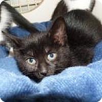 Adopt A Pet :: Finley - Stafford, VA