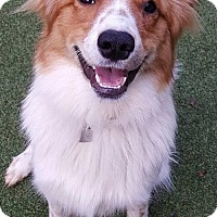 Adopt A Pet :: Letty - Evansville, IN