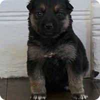 Adopt A Pet :: LAGUNA - Winnipeg, MB