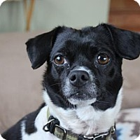 Adopt A Pet :: Odie Lou - Morgan Hill, CA