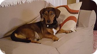 Basset Hound Mix Dog for adoption in Northport, Alabama - Sonny