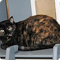 Adopt A Pet :: Ana - Parsons, KS