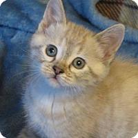 Adopt A Pet :: Rachael - Davis, CA
