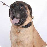Adopt A Pet :: Lenny - Goodyear, AZ
