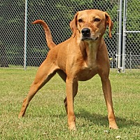 Adopt A Pet :: Joyce - Savannah, TN