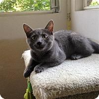 Adopt A Pet :: Misty - River Edge, NJ