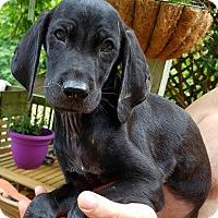 Adopt A Pet :: Casey - Charlestown, RI
