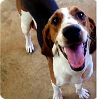 Adopt A Pet :: Willa - Barnegat, NJ