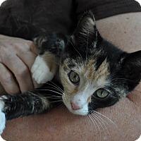 Adopt A Pet :: Rio - Gaithersburg, MD