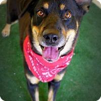 Adopt A Pet :: Blaze - Casa Grande, AZ