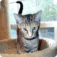 Adopt A Pet :: Miley - North Wilkesboro, NC