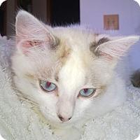 Adopt A Pet :: Skye - Wamego, KS