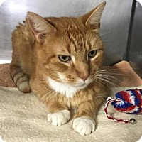 Adopt A Pet :: Max-10 years old - Voorhees, NJ