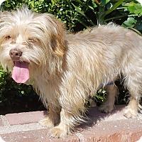 Adopt A Pet :: Alec - Los Angeles, CA