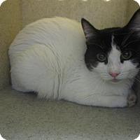 Adopt A Pet :: T. ZEBRAFISH - Reno, NV