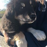 Adopt A Pet :: Leland - Sparta, NJ