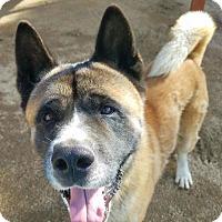 Adopt A Pet :: Tomatsu - Romoland, CA
