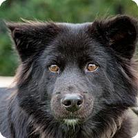 Adopt A Pet :: Ragnar - San Diego, CA