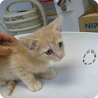 Adopt A Pet :: *TUCK* - Salt Lake City, UT