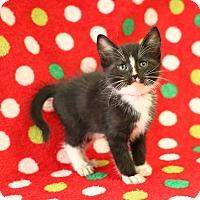 Adopt A Pet :: Pilgrim - Yucaipa, CA
