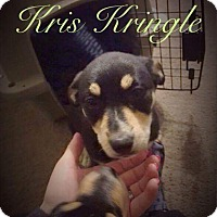 Adopt A Pet :: Kris Kringle - Garner, NC