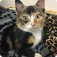 Adopt A Pet :: Tiddlywink - Muskegon, MI