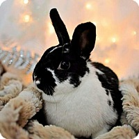Adopt A Pet :: Isabeau - London, ON