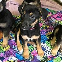 Adopt A Pet :: Mike - Phoenix, AZ