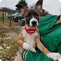 Adopt A Pet :: Bunny - Wenonah, NJ
