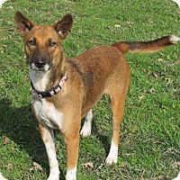 Adopt A Pet :: Lily - Sonoma, CA