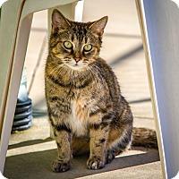 Adopt A Pet :: Jane - Martinsville, IN