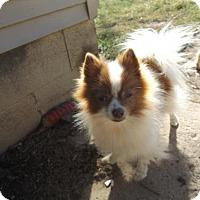 Adopt A Pet :: Taz - Zaleski, OH