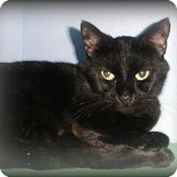 Adopt A Pet :: Libby - Arkadelphia, AR